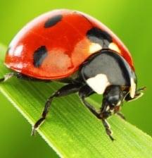 bug me, bug me!