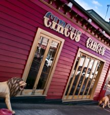 Auckland Family Cafes with Playgrounds