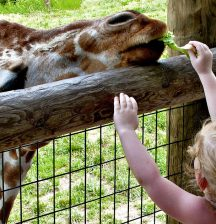 10 reasons why going to the zoo helps your child's I(and E)Q!