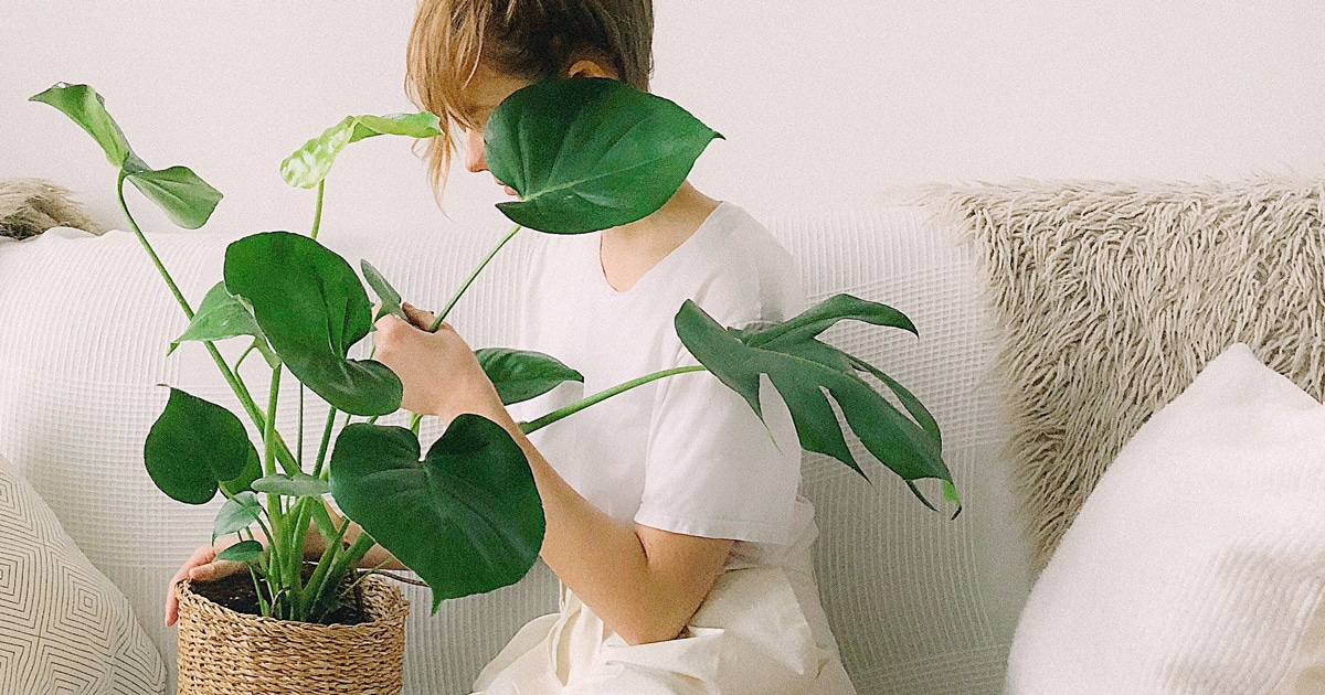 Indoor Plants Might Even Help Your Kids And You Sleep Better Now How To Keep Them Alive And Thriving Tots To Teens,Upholstered Club Chair And Ottoman