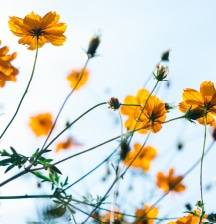 5 ways to help with hay fever