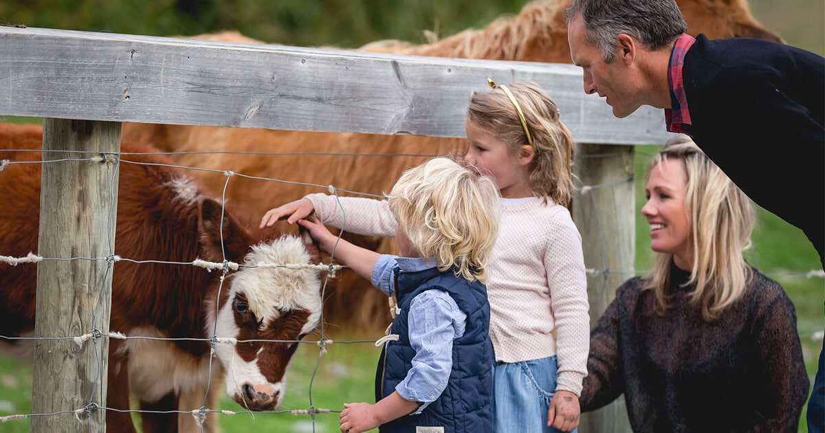 Kids petting a cow at Walter Peak farm station in Queenstown