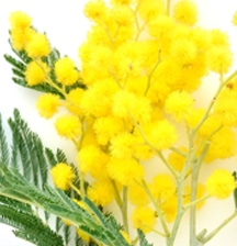 Spring allergy solutions